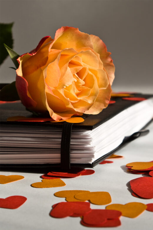 A rose on top of a book. Photo by Michael Faes, FreeImages.com